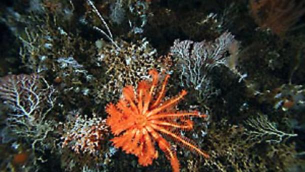 Unbekanntes Leben auf dem Meeresgrund