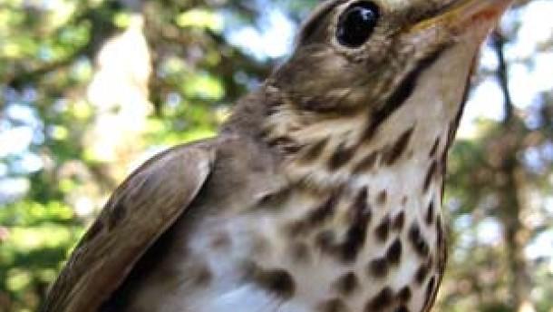 Ein Magnetfühler im Vogelauge dient als Navigationshilfe