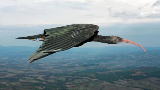 Im Aufwind des Vordervogels