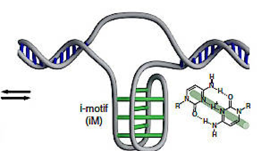 Gepaarte Cytosin-Basen: i-motif