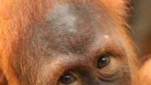Soziale Köpfe im Tierreich