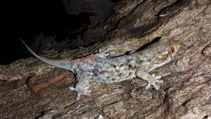 Ein Gecko fährt aus der Haut