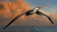 Der simulierte Gleitflieger: Pelagornis sandersi