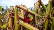 Klimawandel-Opfer auf Vanuatu?