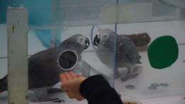 Selbstlose Papageien