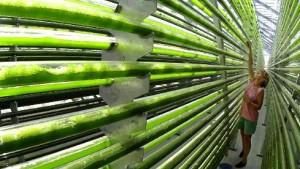 Der Frühling der grünen Sonnenkollektoren