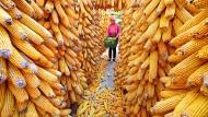 Reiche Ernten: In Zukunft werden wir noch mehr davon benötigen, soll die wachsende Weltbevölkerung ernährt werden.