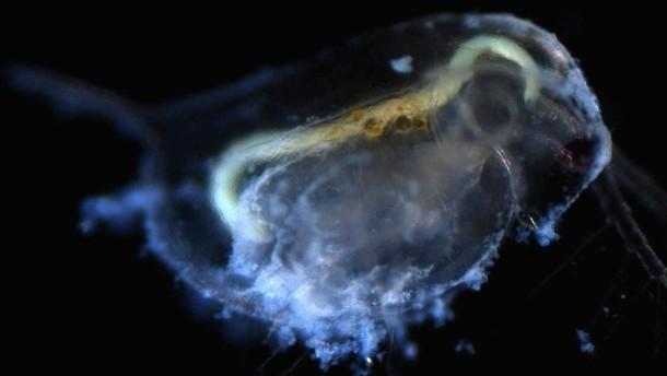 Wasserfloh mit Titandioxid-Nanopartikeln: Natur und Wissenschaft, Physik und Chemie