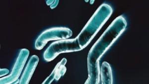 Antikörper für den kranken Körper
