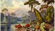 """Diesen Urwald sah Haeckel während einer Bootsfahrt auf dem Kelany Ganga (""""Blauer Fluss"""")."""