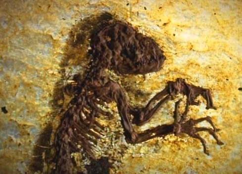 Skorpion-Stars datieren