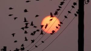 Die Abendsonne weist den Weg