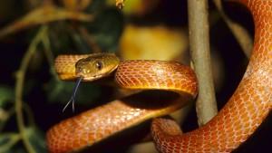 Die Schlange mit dem Lassotrick
