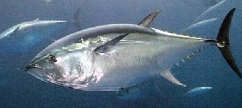 Datieren von reichlich Fisch