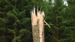 Der Wald muss wachsen, die Waldforschung schneller