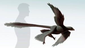 Der Albatros unter den Raubsauriern