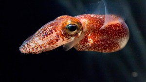 Tientenfische stehen am Ende der Nahrungskette. Wie stark versucht sind sie?