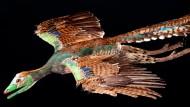 Lebendrekonstruktion des Urvogel Archaeopteryx Nr. 11 im Flug (Modell von R. Liebreich)