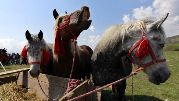 Pferde in Rumänien