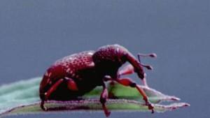 Käfer und Pflanzen im Gleichschritt