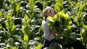 Chancen für die pflanzliche Proteinfabrik