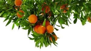 Wer rettet die Orange?