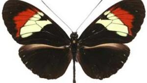 Zwei bunte Flügel und die Folgen