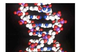 Erbmolekül bildet die Basis für Nanoröhrchen