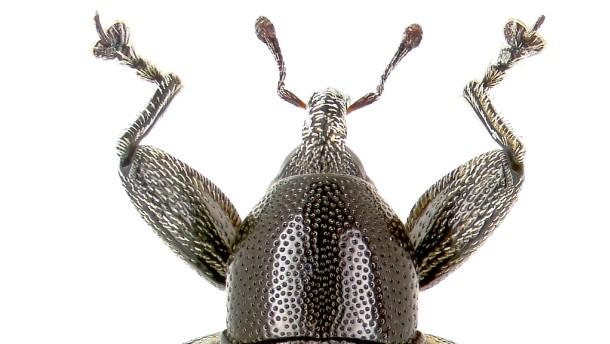 Ausgeklügelte Ingenieurskunst im Insektenreich