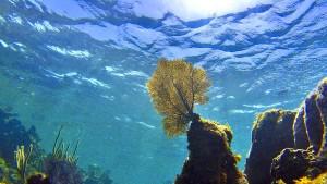 Ozeane erwärmen sich schneller als erwartet