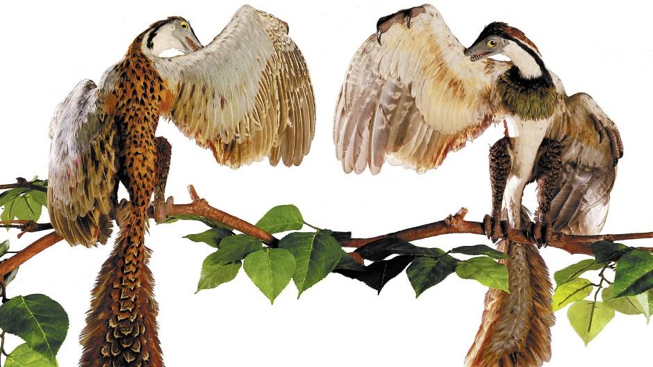Archaeopteryx-Modell von Dennis Wilson aus dem Sauriermuseum Aathal.