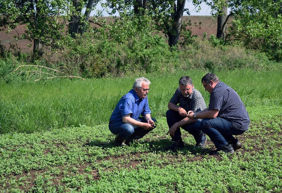 Gibt es bald mehr Blühstreifen?   Helmut Schulze, Jens Birger und Sven Borchert (von links) begutachten den im vergangenen Sommer angelegten Blühstreifen in Oschersleben in Sachsen-Anhalt. In zehn landwirtschaftlichen Demonstrationsbetrieben bundesweit werden neue Wege zum Schutz der Artenvielfalt ausprobiert.