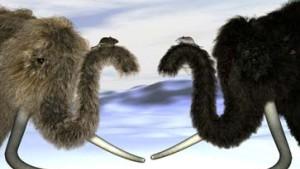 Auch Mammuts kannten Blondinen