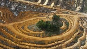 Brüssel erwägt gesetzliche Schranken gegen Urwaldrodung