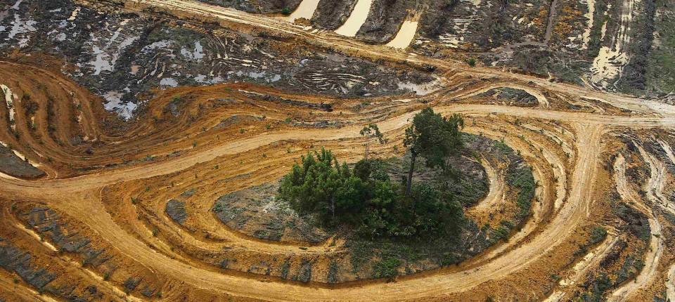 Lebensraumzerstörung auf Kalimantan: Für eine Ölpalmplantage muss der Urwald weichen.