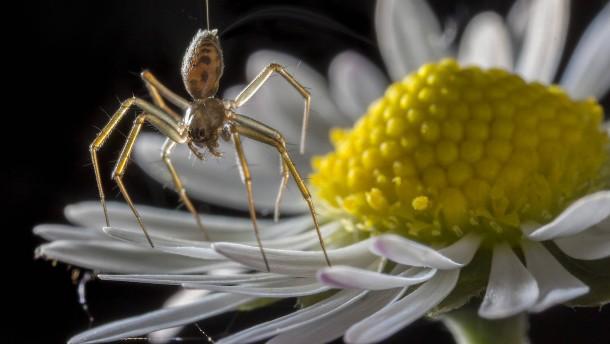 Air Arachno