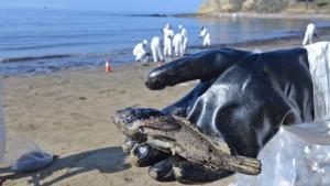 Das Bio-Mittel gegen Ölpest