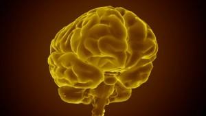 Stammzellen für gutes Gedächtnis?