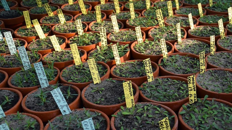 Erhaltungskulturen von gefährdeten Wildpflanzenarten im Botanischen Garten Berlin