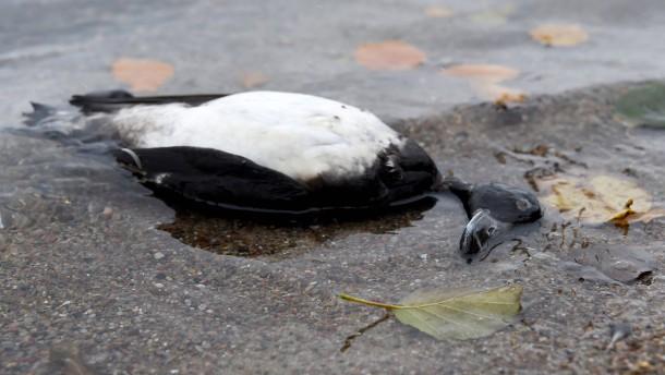Vogelgrippe-Epidemie weitet sich aus