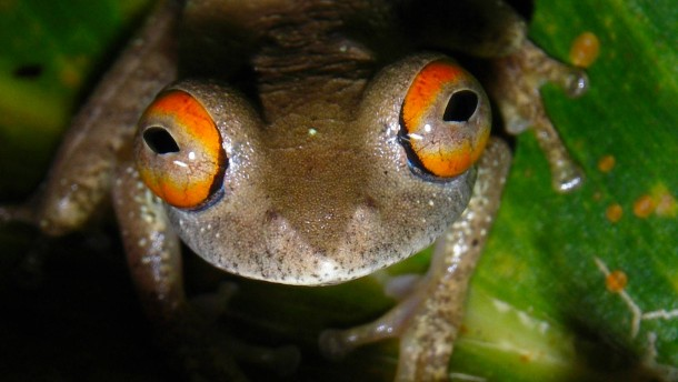 Killerpilze im Froschparadies