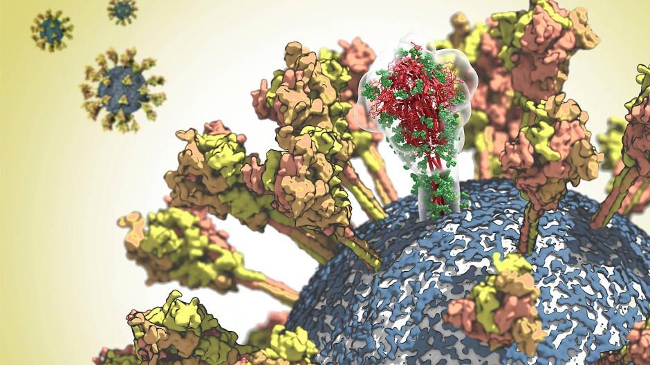 """Oberfläche des Sars-CoV-2-Erregers in einer Simulation mit den Spike-Proteinen (""""Stacheln""""), in denen Mutationen und damit die molekulare Struktur besonders aufmerksam verfolgt werden müssen."""