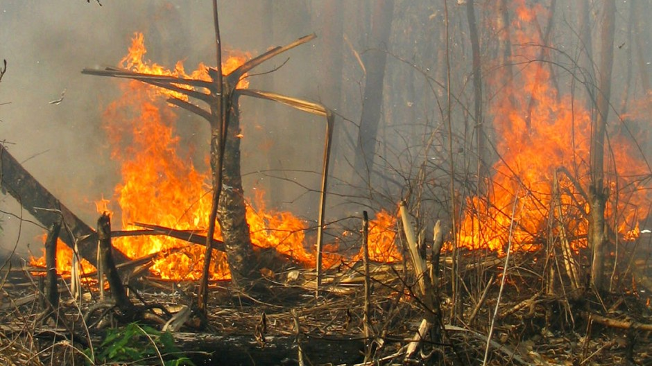 Feuerroden im tropischen Regenwald: Heizt sich der Klimastreit zwischen Politik und Forschung immer mehr auf?