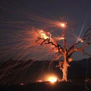 Brennende Eiche in Kalifornien mit Sternschnuppe im Hintergrund. Extreme Trockenheit und Winde fachen die Feuer in vielen Weltgegenden an.