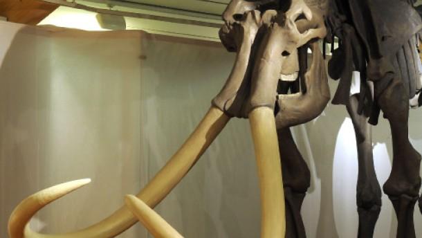 Das sequenzierte Mammut