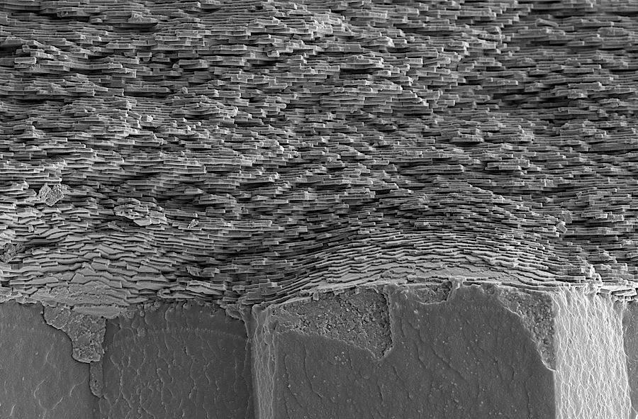 Die Schale eines Weichtiers im Querschnitt: In ein organisches Gerüst, das auf Chitin basiert, sind winzige, übereinander gestapelte Plättchen aus Kalziumkarbonat eingelagert.