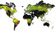 Wo ist Grönland geblieben? Die arktische Insel fehlt auf dieser Karte des weltweiten Waldbestandes (Grün und Gelb) und seiner Änderungen (übrige Farben) des Global-Forest-Change-Projektes der University of Maryland ebenso wie Spitzbergen und die Antarktis - schlicht weil dort keine Wälder wachsen, zumindest zu den gegenwärtigen klimatischen Bedingungen auf der Erde.
