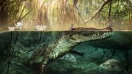 Crocodylus checchiai ist ein gemeinsamer Vorfahre von Nilkrokodil und amerikanischen Krokodilen.