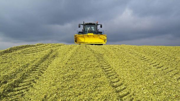 Bloß nicht noch mehr Mais