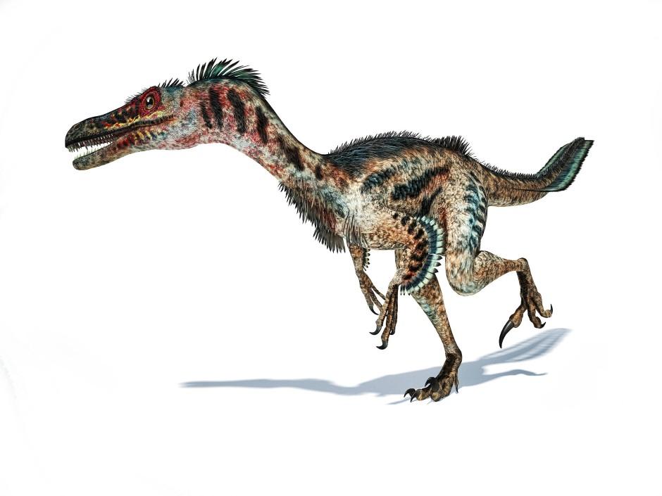 Die Velociraptoren schmückte ein Federkleid. Zum Fliegen war es zu spärlich. Es half aber vermutlich beim Erklimmen steiler Hänge.